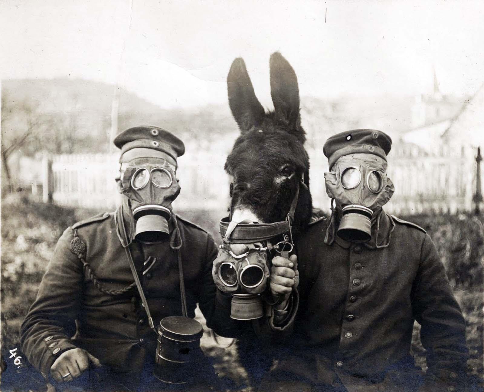 Dva němečtí vojáci a jejich mezek v plynové masce v první světové válce, 1916