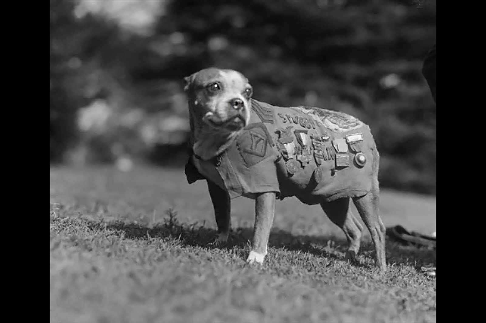 Seržant Stubby